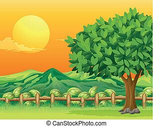 bello, paesaggio albero
