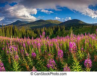 bello, paesaggio autunno, montagne, con, fiori dentellare