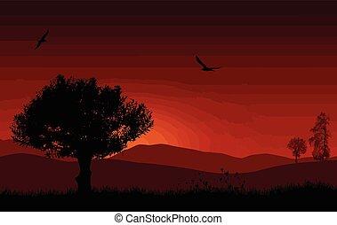 bello, paesaggio, con, albero, rosso, mattina, alba