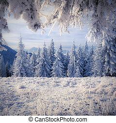 bello, paesaggio inverno, con, neve coprì alberi