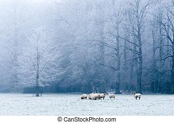 bello, paesaggio inverno, scena