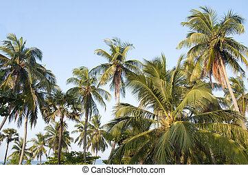 bello, palma, cielo, albero, contro