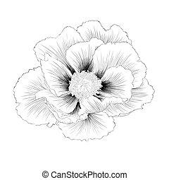 bello, pianta, arborea, peony), isolato, paeonia, fondo., fiore, nero, (tree, monocromatico, bianco