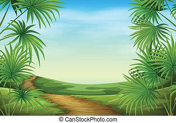 bello, piante, palma, paesaggio