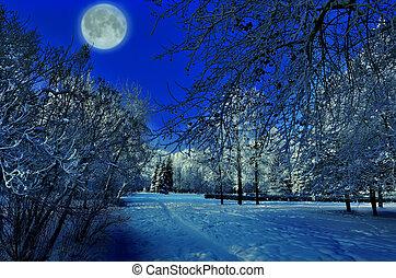 bello, pieno, inverno, parco, sopra, -, luna, notte, paesaggio