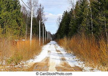 bello, primavera, foresta, strada, foto