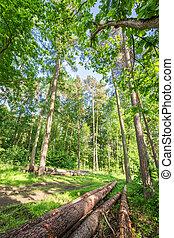 bello, primavera, in, il, foresta verde, polonia