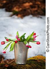 bello, primavera, tulips, secchio, foresta, fuori