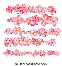 bello, rosa, fiore, ciliegia, set., profili di fodera