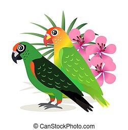 bello, rosa, uccelli, colorito, esotico, due, isolato, lovebird, vettore, pappagalli, fiori bianchi, fondo