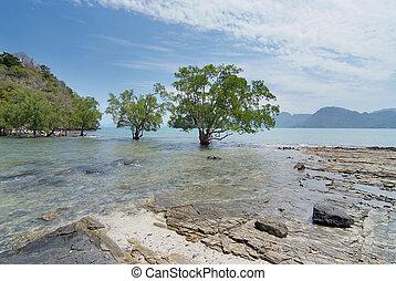 bello, scenario, albero, Isole