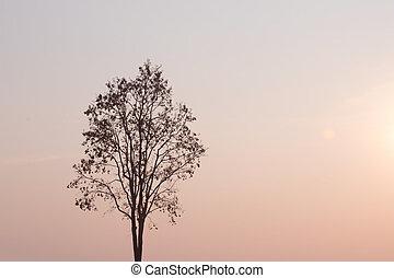 bello, scenario, forest., colorare, cielo, luminoso, tropicale, arancia, rainforest., tramonto, scuro, contrasto