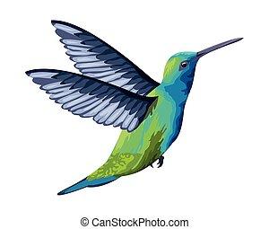 bello, selvatico, icona, cartone animato, uccelli