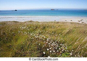 bello, selvatico, spiaggia