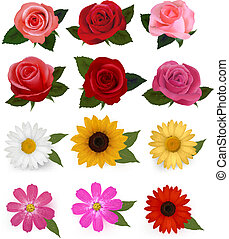 bello, set, illustration., colorito, grande, flowers., vettore