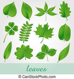 bello, set, naturale, foglie, verde, eps10, icona