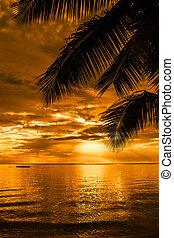 bello, silhouette, albero, palma, spiaggia tramonto