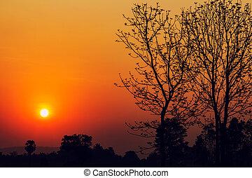 bello, silhouette, campagna, albero, tailandia, alba