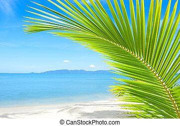 bello, spiaggia, con, palma, sopra, il, sabbia