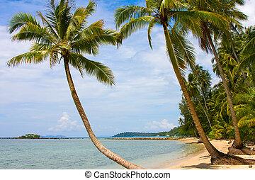 bello, spiaggia tropicale, thailand., mare