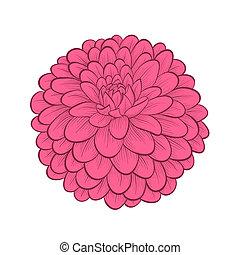 bello, stile, grafico, fiore, dalia, porge-dipinto