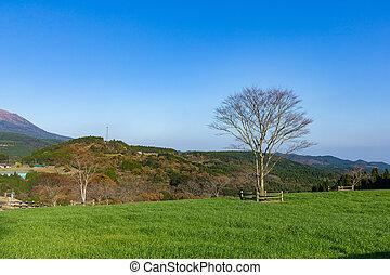 bello, terreno coltivato
