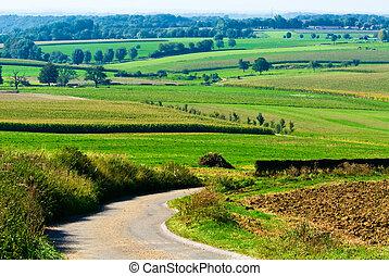 bello, terreno coltivato, paesaggio