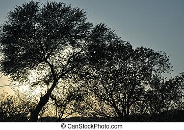 bello, tramonto, albero