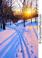 bello, tramonto, in, uno, inverno, parco