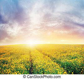bello, tramonto, sopra, il, colorito, prato