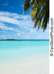 bello, tropicale, island.