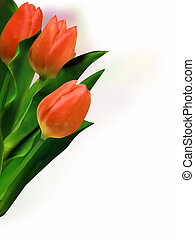 bello, tulips., mazzo