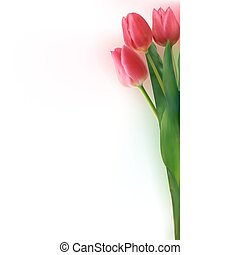 bello, tulips., mazzolino, eps, 8, rosso