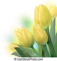 bello, tulips., mazzolino, eps, giallo, 8