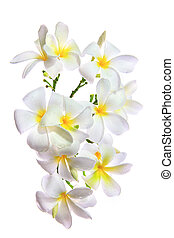 bello, uso, fiori, naturale, mazzolino, petalo, foglie,...