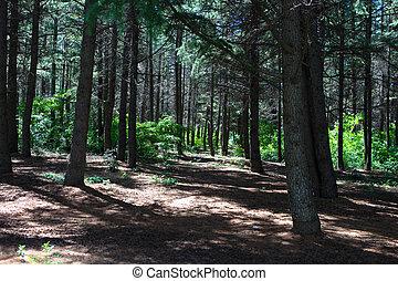 bello, verde, foresta