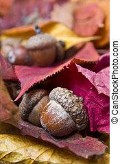 bellotas, con, otoño sale