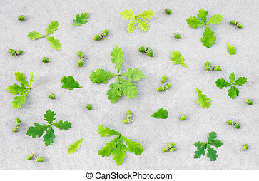 bellotas, hojas, roble, concreto, fondo verde