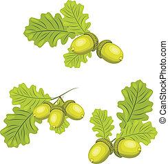 bellotas, ramas de oak