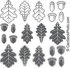 bellotas,  vector, roble, hojas