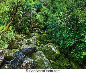 belső, ég, forest., zöld, folyó, kicsi, ősi
