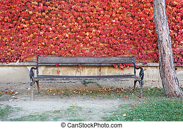 Bench and red leaves