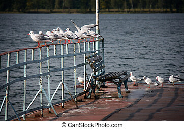 Bench at a lake