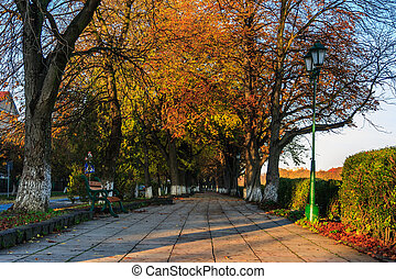 bench at yellow autumn alley - bench at alley under the...