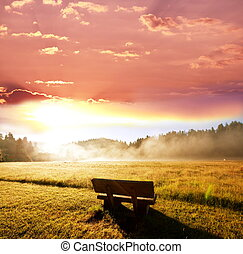Bench - bench on grassland