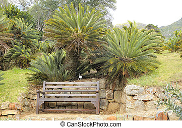 Bench beneath cycads in Kirstenbosch