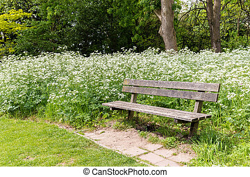 Bench enclosed by white flowers