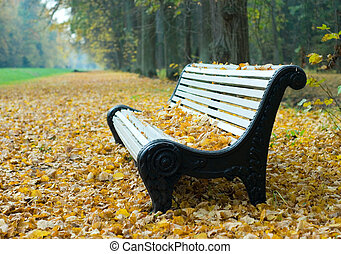 bench in a autumn park