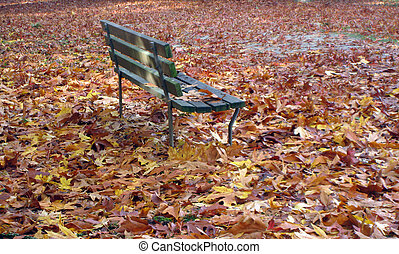 Bench in a park surrounded by fall leaves