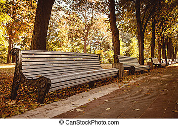 Bench in autumn park. Autumn landscape